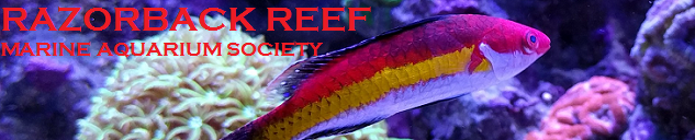 Razorback Reef Marine Aquarium Society